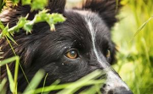 do-not-kick-the-sheepdog2